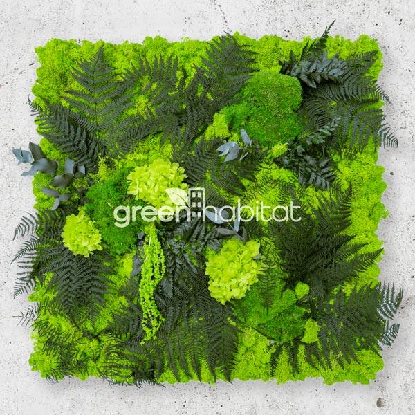 Lichene mix vegetation