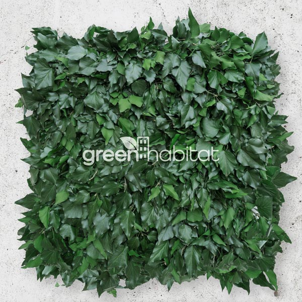 Wall Forest Hedera