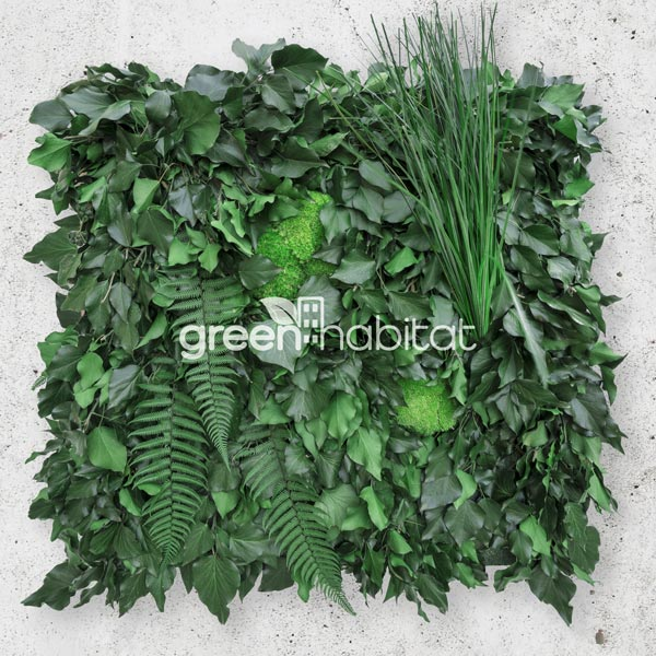 Wall Forest Hedera Mix